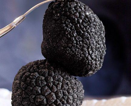 truffe noire gastronomie